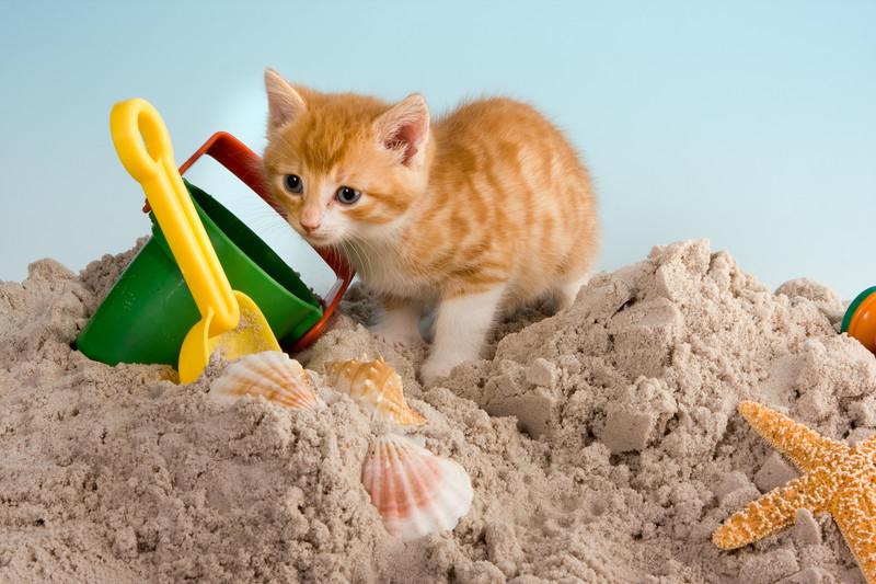 gatti e vacanze